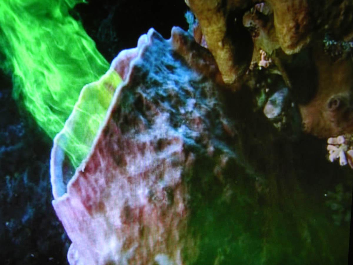 Sponge Pumping Water